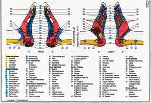 Pied De Le by Le Pied Planches De R 233 Flexologie Et Anatomie