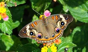 Blok888: Top 10 Most Beautiful Butterflies in the world ...