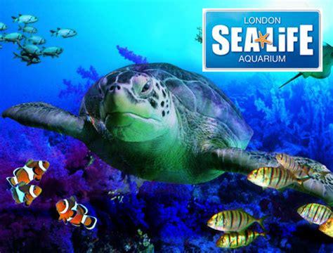 sea aquarium entrance fee skegness buy sea aquarium tickets attractiontix