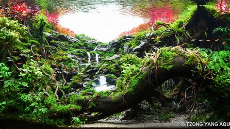 Aquascape Competition by Previous Years Contest 2018 Iiac Aquascaping Contest