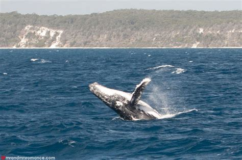 The Best Whale Watching In Hervey Bay