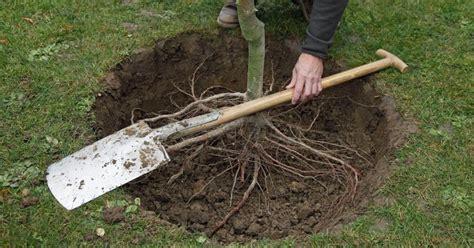 Garten Gestalten Baum by Garten Gestalten Mit Pflanzsteinen Baum