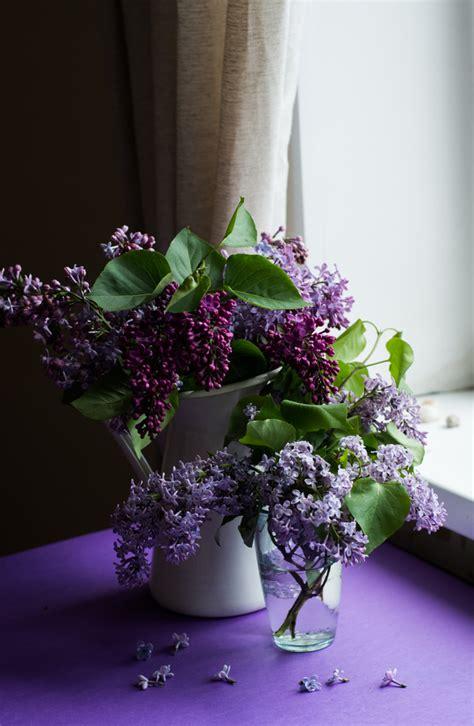 violet flowers decoration  room stock photo flowers