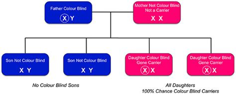 How Does A Person Inherit Color Blindness by Inherited Colour Vision Deficiency Colour Blind Awareness