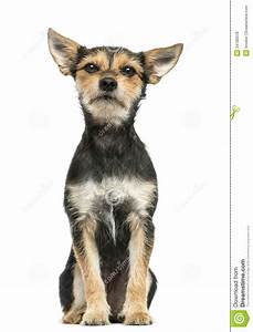 crossbreed dog sitting stock photo cartoondealercom With looking for dog sitter