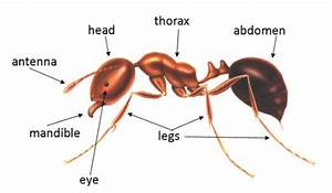Ant Activities