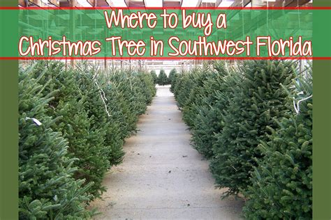 christmastree lot utah where to buy a tree in southwest florida explores southwest florida