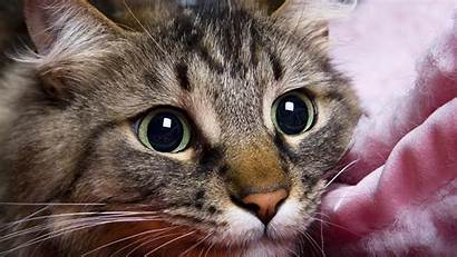Cat 1080p Wallpapers Background Kittens Desktop Sleepy