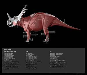 Muscle Diagram 1 By Red