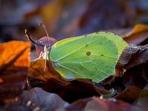 Schmetterlinge überwintern Helfen : 8 tipps wie du schmetterlingen beim berwintern hilfst bl hendes sterreich ~ Frokenaadalensverden.com Haus und Dekorationen