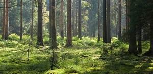 Foret à Bois : for t voyages cartes ~ Nature-et-papiers.com Idées de Décoration