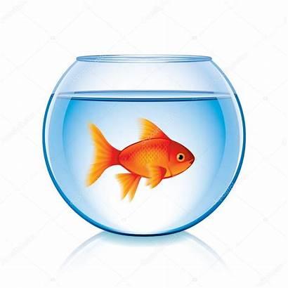 Goldfish Bowl Clipart Fish Clip Vector Aquarium