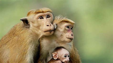 Ver El reino de los monos (2015) Online Castellano, Latino