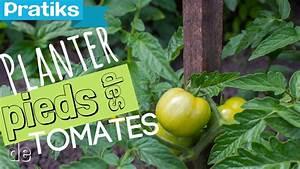 Planter Des Graines De Tomates : comment planter ses pieds de tomates pratiks ~ Dailycaller-alerts.com Idées de Décoration