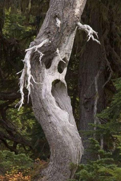 strange trees xcitefunnet