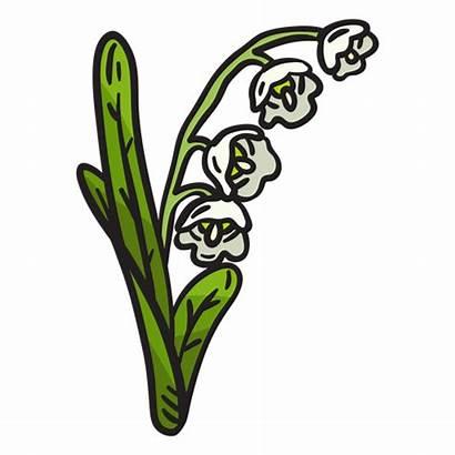 Lily Valley Flower Lirio Transparent Svg Vale