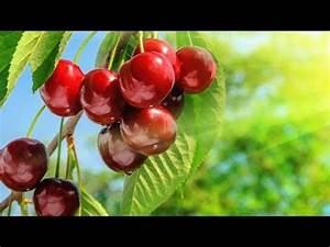 Aufbau Einer Kirschblüte : befruchtung einer kirschbl te von der bl te zur frucht doovi ~ Frokenaadalensverden.com Haus und Dekorationen