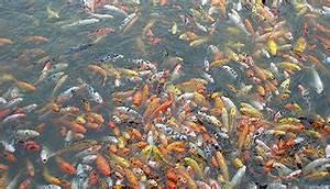 Welche Bodenbeläge Gibt Es : welche fischarten gibt es wissen ~ Lizthompson.info Haus und Dekorationen
