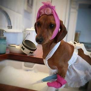 house cleaning lady doxie love pinterest dachshunds With dog cleaning house