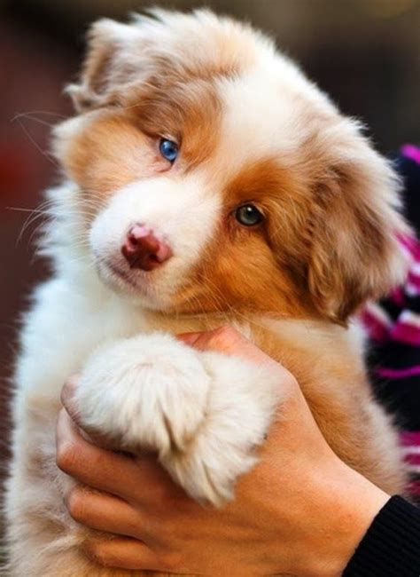 cute puppy top   affectionate dog