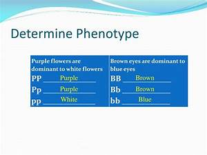 PPT - How to make a Punnett square PowerPoint Presentation ...