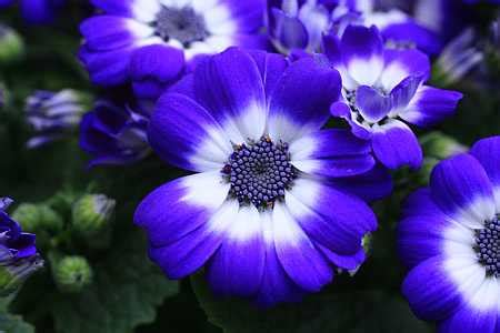 blue flowers names purple and blue flower names www pixshark com images galleries with a bite