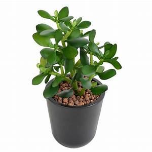 Mini Plante Artificielle : crassula artificiel jade 30cm cactus plantes grasses mini cactus et plantes grasses ~ Teatrodelosmanantiales.com Idées de Décoration