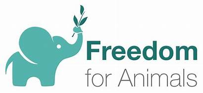 Freedom Animals Charity Animal Protection Organization Give