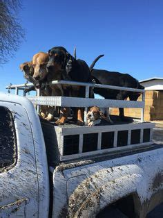 multiple dog dog boxes   ride  style truck