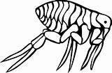 Coloring Flea Pages Bugs Animal Bug Printable Cartoon Animals Sheet sketch template