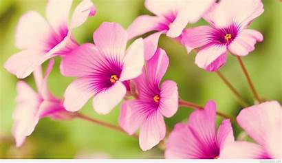 Spring Flowers Wallpapers Awesome Pixelstalk