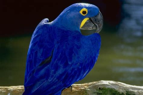 chambre de bonne marseille l 39 ara bleu