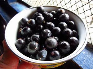Acai Berry For Weight Loss And Many Health Benefits