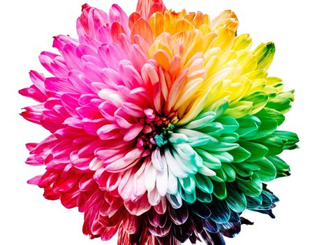 flower colors why is blue the science of colors in marketing