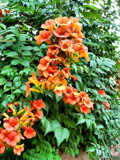 10 Best Climbing Plants For Trellis To Beautify The House