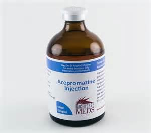 acepromazine for cats acepromazine injection 25mg ml 100ml racehorsemeds
