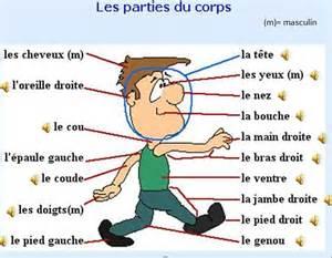 Le Pour Enfant by 1000 Ideas About Les Parties Du Corps On Pinterest