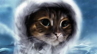 Cats Face Sky Animals Hat Clouds Desktop