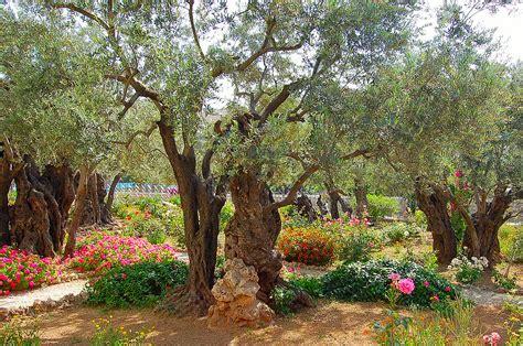 Garden Of Gethsemane Bible by The Garden And Gethsemane