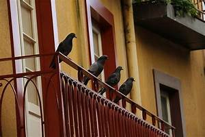 Wie schutze ich mich am besten gegen tauben marktde for Whirlpool garten mit tauben balkon vertreiben