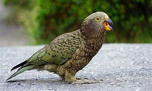 Welche Vögel Können Sprechen : sprechende papageien erfahre jetzt warum papageien ~ A.2002-acura-tl-radio.info Haus und Dekorationen