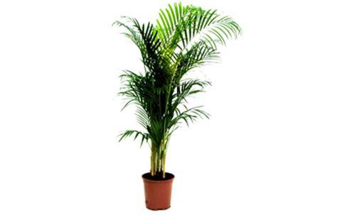 plante pour chambre trois plantes à avoir pour un air dépollué