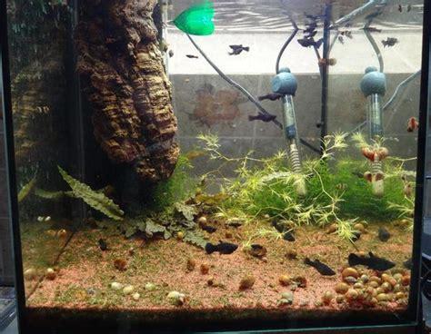 black mollys nachwuchs zu verschenken in leonberg fische aquaristik kaufen und verkaufen