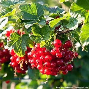 Exotische Früchte Im Eigenen Garten : gartencenter ostmann gr n erleben fr chte aus dem eigenen ~ Lizthompson.info Haus und Dekorationen