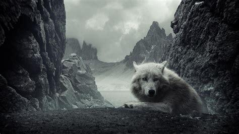 1080p Wolf Wallpaper Hd by Hd Wolf Wallpapers 1080p Wallpapersafari