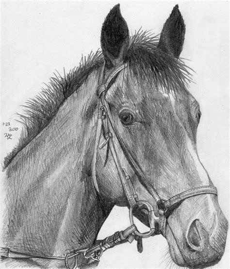 horse head sketch  bricktransformer  deviantart