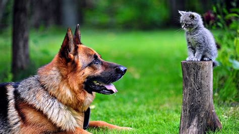 Best 55 Animal Dogs Latest Photos Hd Wallpaper