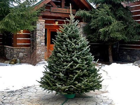 Deal Of The Day 50% Off On Christmas Tree And Wreath