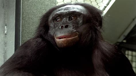 ape language ace  tripped   simple grammar