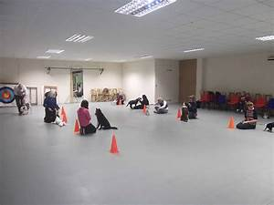 dog training classes indoor basic obedience group course With dog training courses